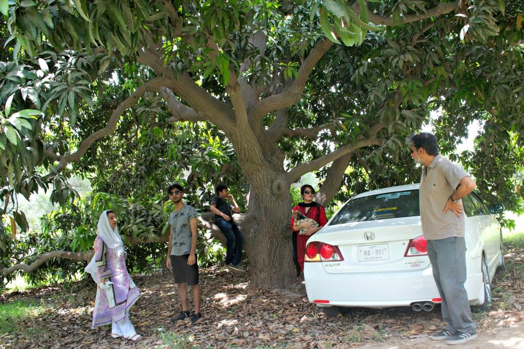 Under the mango tree..