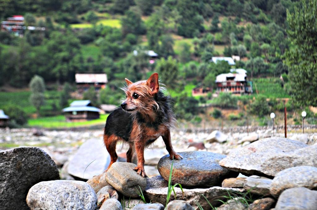 Tia explores Kashmir!